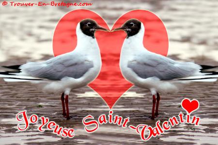 Saint valentin coeur de mouettes ecard bretonne carte - Image st valentin coeur ...