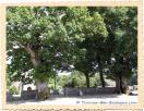 Chênes pédonculés, arbres remarquables